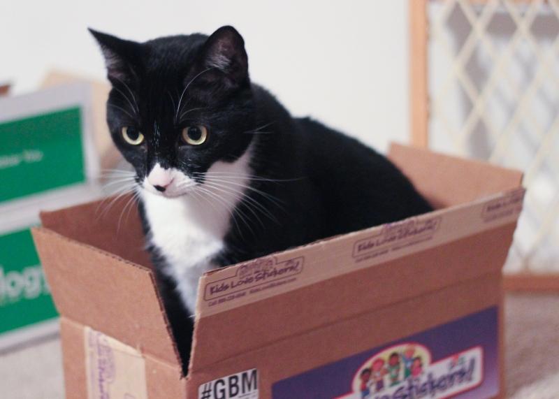 cat_in_a_box