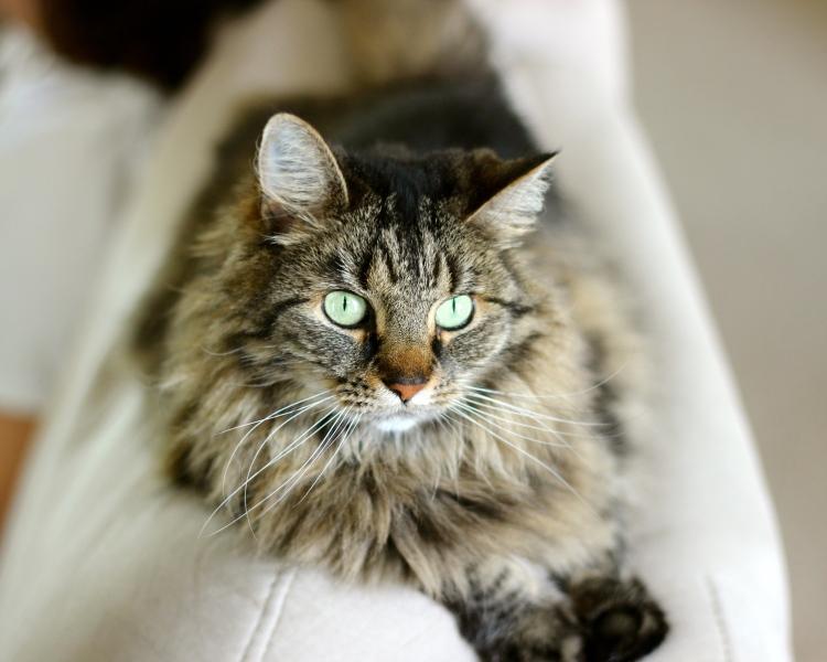 pretty_cat