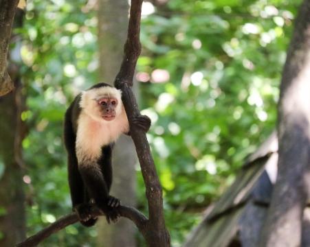 Roatan Monkeys (1 of 29)