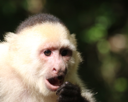 Roatan Monkeys (11 of 29)