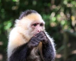Roatan Monkeys (12 of 29)