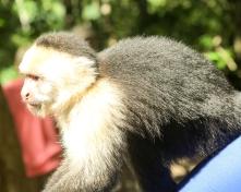 Roatan Monkeys (13 of 29)