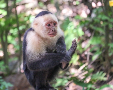 Roatan Monkeys (14 of 29)
