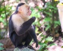 Roatan Monkeys (15 of 29)