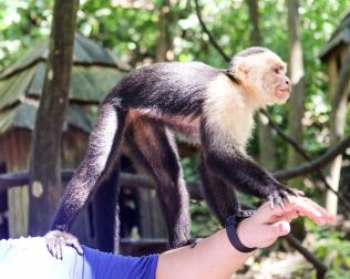Roatan Monkeys (16 of 29)