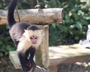 Roatan Monkeys (20 of 29)