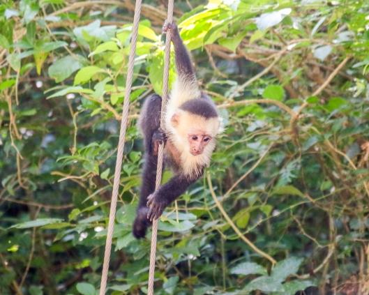 Roatan Monkeys (21 of 29)