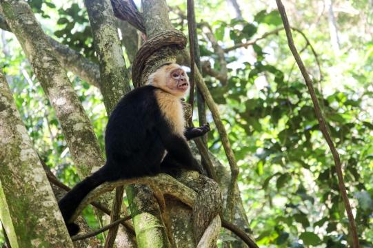 Roatan Monkeys (27 of 29)