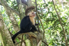 Roatan Monkeys (28 of 29)