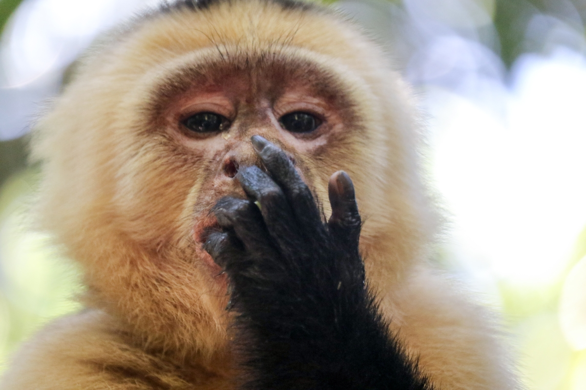 Roatan Monkeys (29 of 29)