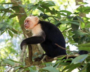 Roatan Monkeys (4 of 29)