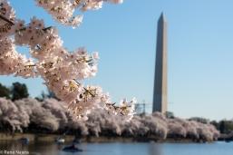 Washington Memorial