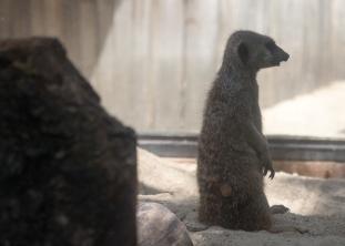 4Jul15_Barranquilla_Zoo-10