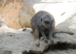 4Jul15_Barranquilla_Zoo-11