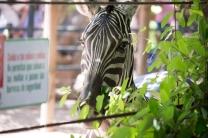 4Jul15_Barranquilla_Zoo-12