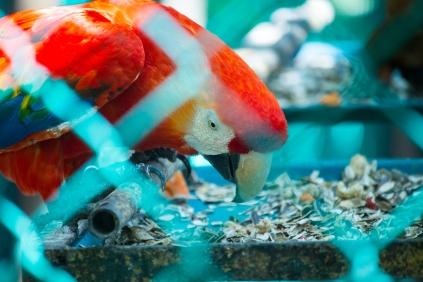 4Jul15_Barranquilla_Zoo-15