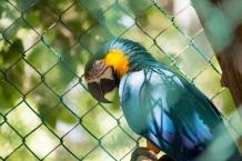 4Jul15_Barranquilla_Zoo-16