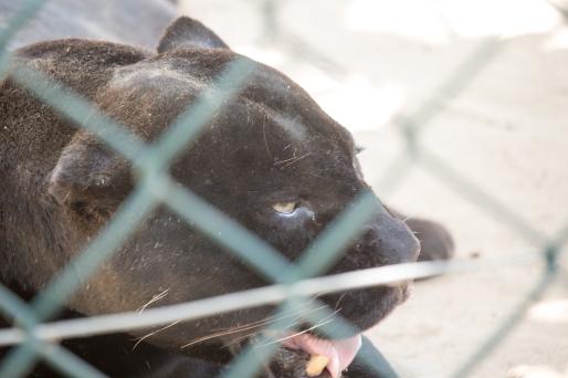 4Jul15_Barranquilla_Zoo-19