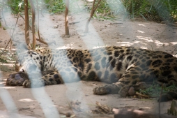 4Jul15_Barranquilla_Zoo-20