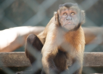 4Jul15_Barranquilla_Zoo-21