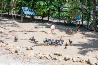 4Jul15_Barranquilla_Zoo-24