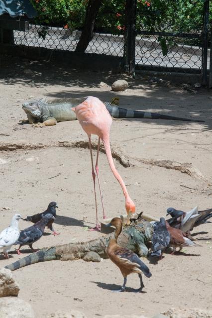 4Jul15_Barranquilla_Zoo-26