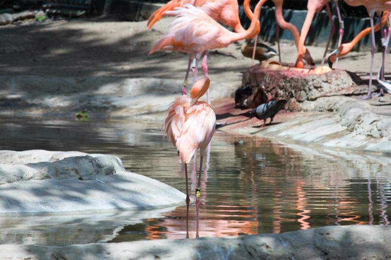 4Jul15_Barranquilla_Zoo-28