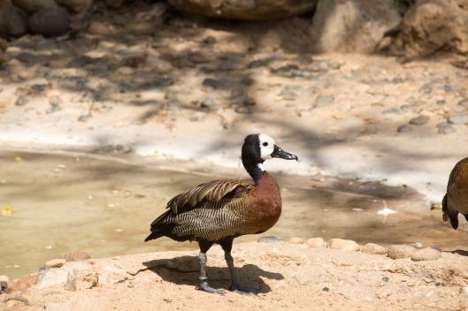 4Jul15_Barranquilla_Zoo-30