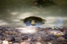 4Jul15_Barranquilla_Zoo-32