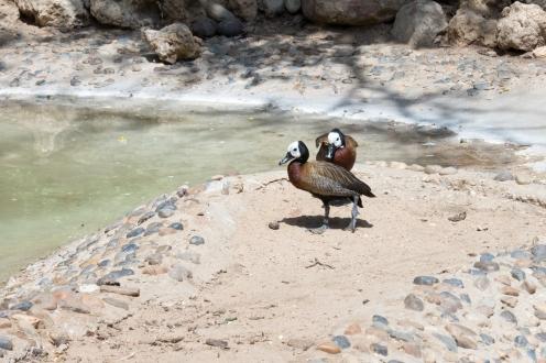 4Jul15_Barranquilla_Zoo-33