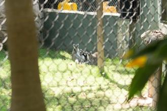 4Jul15_Barranquilla_Zoo-34