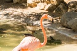 4Jul15_Barranquilla_Zoo-37