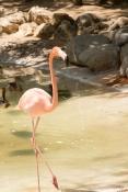 4Jul15_Barranquilla_Zoo-38