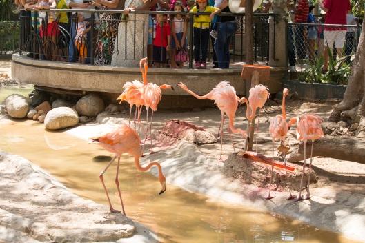 4Jul15_Barranquilla_Zoo-39