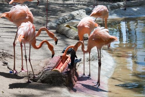4Jul15_Barranquilla_Zoo-40