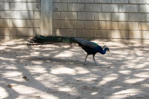 4Jul15_Barranquilla_Zoo-42