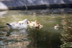 4Jul15_Barranquilla_Zoo-44