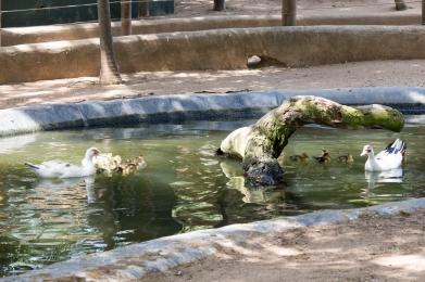 4Jul15_Barranquilla_Zoo-45