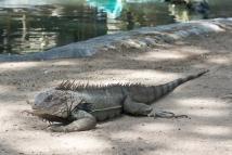 4Jul15_Barranquilla_Zoo-47