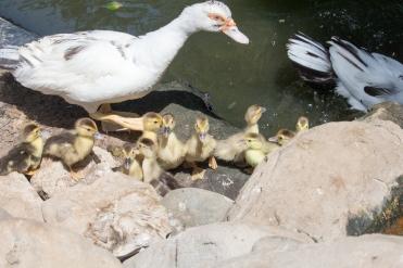 4Jul15_Barranquilla_Zoo-51