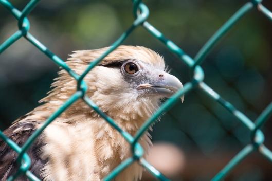 4Jul15_Barranquilla_Zoo-58