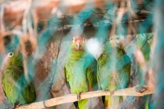 4Jul15_Barranquilla_Zoo-60
