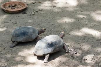 4Jul15_Barranquilla_Zoo-61