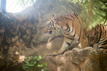 4Jul15_Barranquilla_Zoo-65