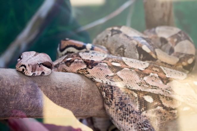 4Jul15_Barranquilla_Zoo-70