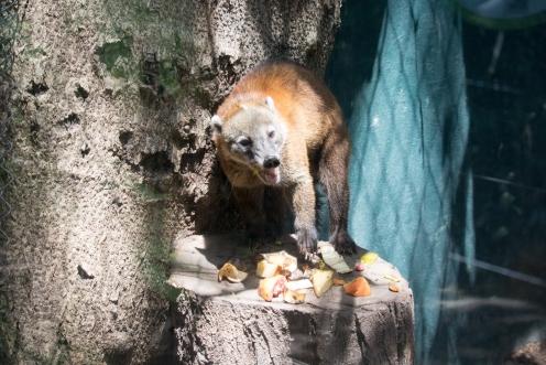 4Jul15_Barranquilla_Zoo-76