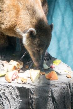 4Jul15_Barranquilla_Zoo-77