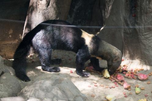 4Jul15_Barranquilla_Zoo-78