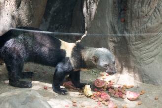 4Jul15_Barranquilla_Zoo-79