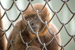 4Jul15_Barranquilla_Zoo-81